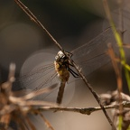 20120909_Chartres_137.jpg